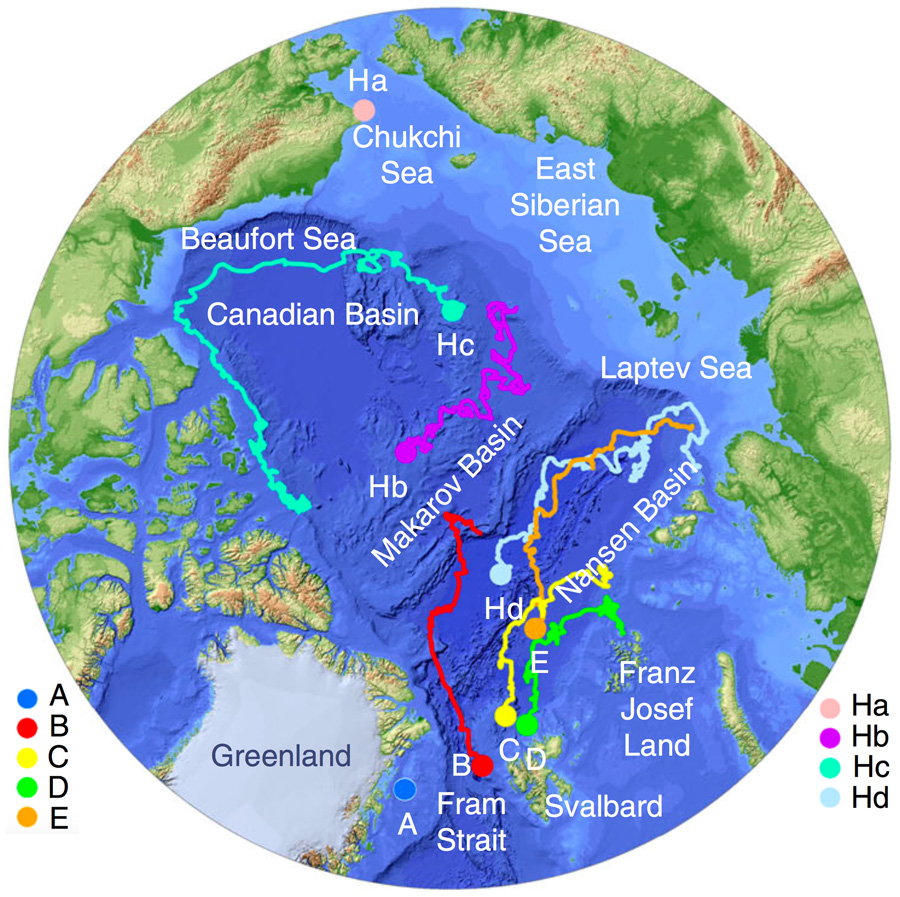 Data image showing sea ice motion and sea ice core collection