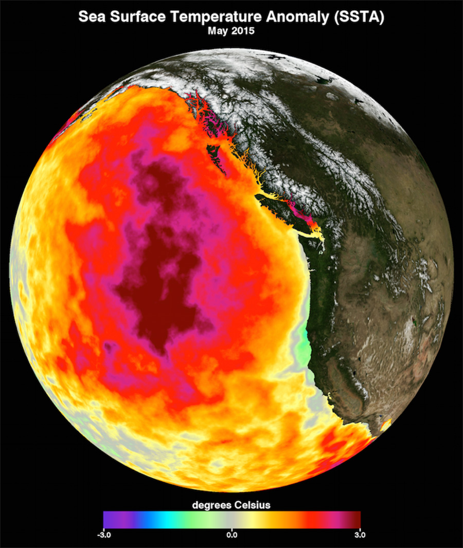 Data image showing Pacific Ocean warming in 2015