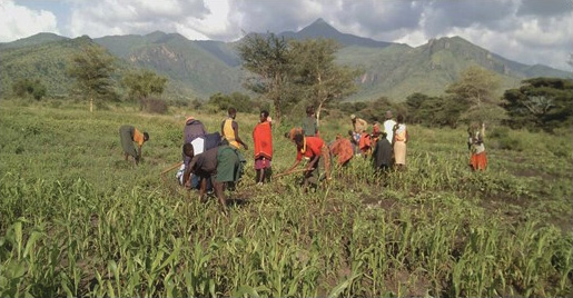 Photo of people farming in a field in Africa.