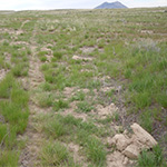 Photo of dry scrub land with mountain mesa in distance.