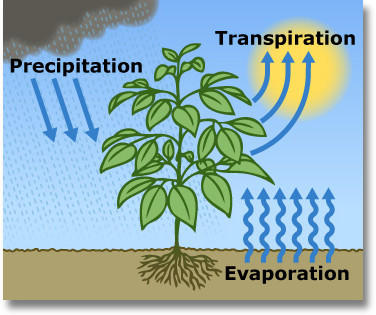 The combination of evaporation from the land surface and transpiration from plants is evapotranspiration, abbreviated ET. This parameter approximates the consumptive use of a landscape's plants.