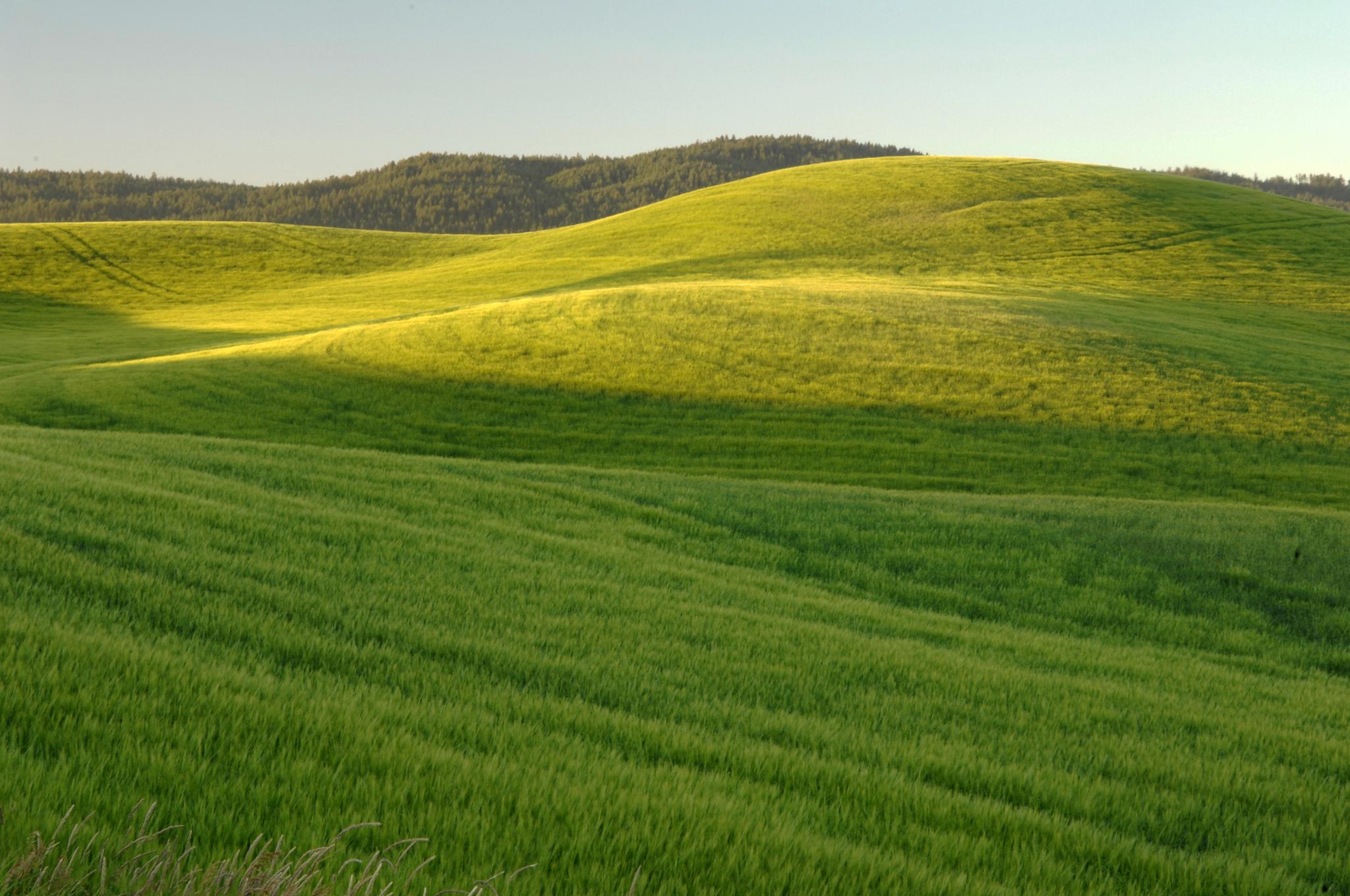 A field near Moscow, Idaho