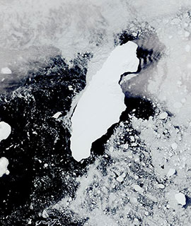 Iceberg A68A on 11 January 2020 (Terra/MODIS)