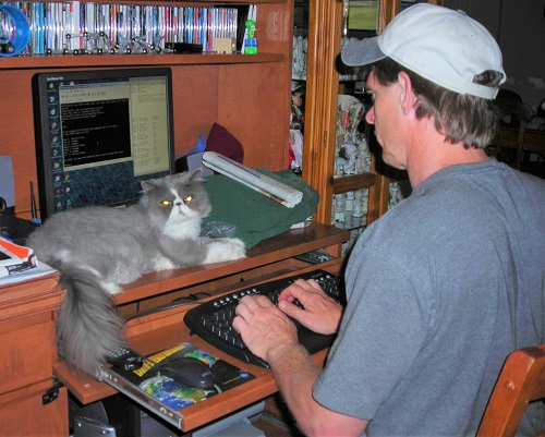 Image of Dr. Thome working at his home computer with his back to the camera. His gray and white cat Aster is sitting in front of the computer facing the camera.