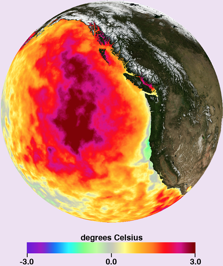 Picture of a globe showing a sample of data available from MUR-SST, sea surface temperatures in the Pacific Ocean.