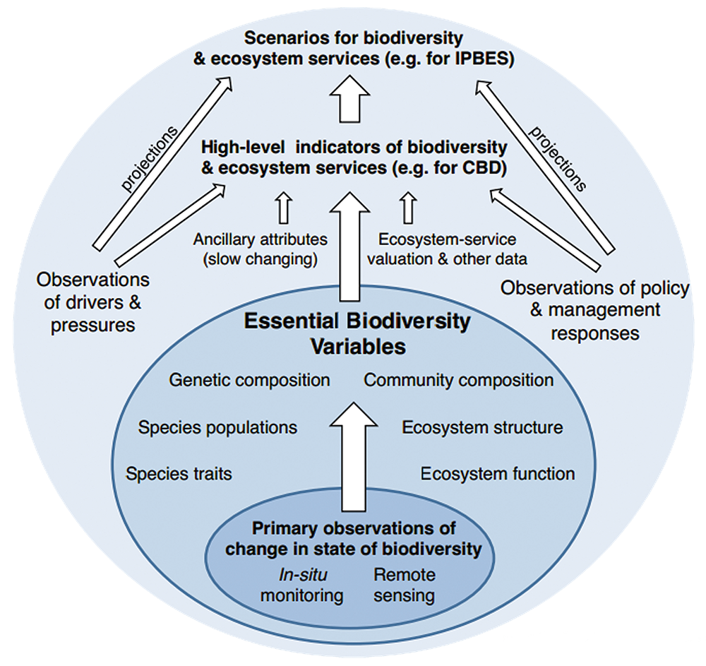 Essential Biodiversity Variables as defined by the Group on Earth Observations Biodiversity Observation Network; there are 6 EBV classes with 21 EBV candidates, focused on genetic composition, species populations, species traits, community composition, ecosystem function, and ecosystem structure.