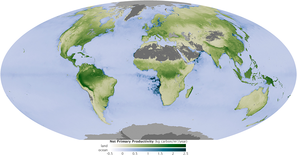 net primary productivity in August 2010, when the Northern Hemisphere reached its peak productivity. On land, areas where plants are growing most—and storing the most carbon—are dark green. Highly productive areas in the ocean, where the most phytoplankton are growing, are dark blue.