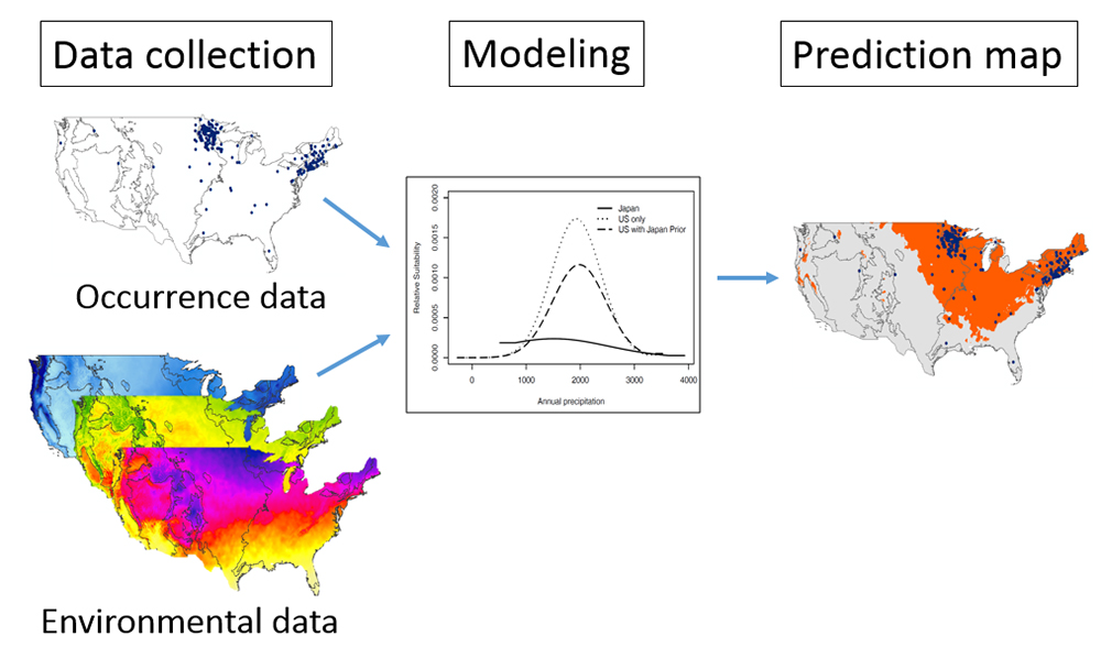 Conceptual diagram of how data are used in modeling to produce a species distribution map.