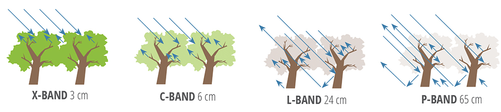 Sensitivity of SAR measurements to forest structure and penetration into the canopy at different wavelengths used for airborne or spaceborne remote sensing observations of the land surface.