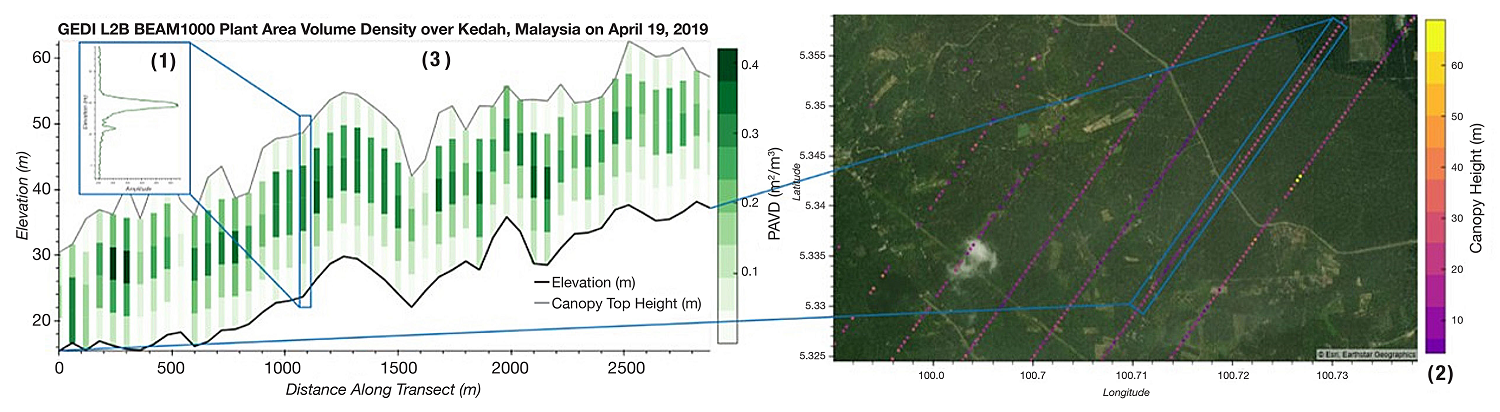Left image shows GEDI data, with a series of colored bars at different heights indicating ground elevation, canopy height, and plant density. Left image shows colored dots indicating ground elevation along GEDI sensor track.
