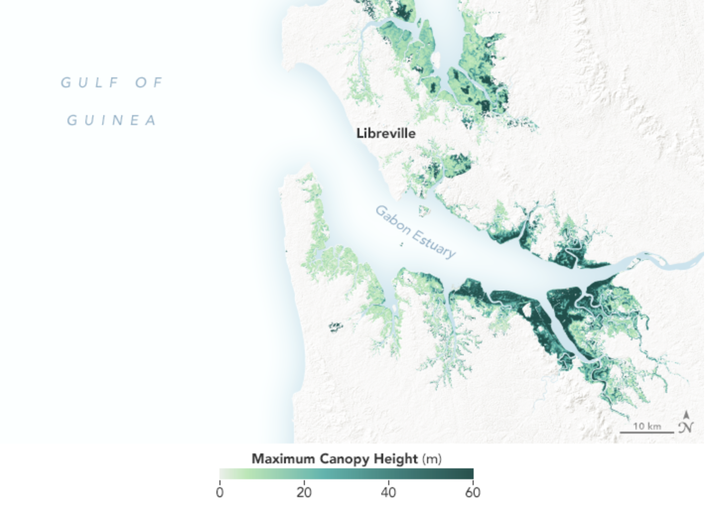 Figure shows mangrove tree heights in the the Gabon Estuary.