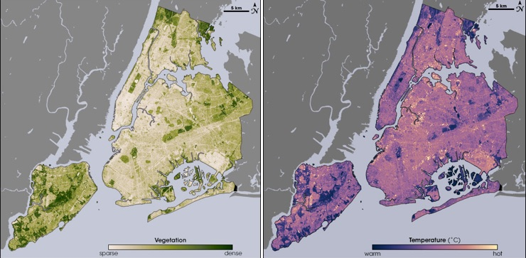 These images from the NASA/USGS satellite Landsat show the cooling effects of plants on New York City's heat. On the left, areas of the map that are dark green have dense vegetation. Notice how these regions match up with the dark purple regions—those with the coolest temperatures—on the right. Image credit: Maps by Robert Simmon, using data from the Landsat Program.