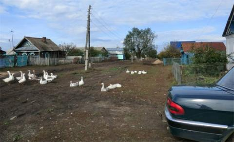 Photograph of a typical farm in the Samara region of Russia
