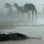 Palm trees blowing in severe hurricane winds - from Hurricane Dennis.