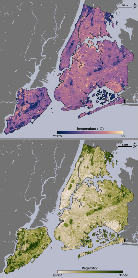 These images from the NASA/USGS satellite Landsat show the cooling effects of plants on New York City's heat. On the left, areas of the map that are dark green have dense vegetation. Notice how these regions match up with the dark purple regions—those with the coolest temperatures—on the right.