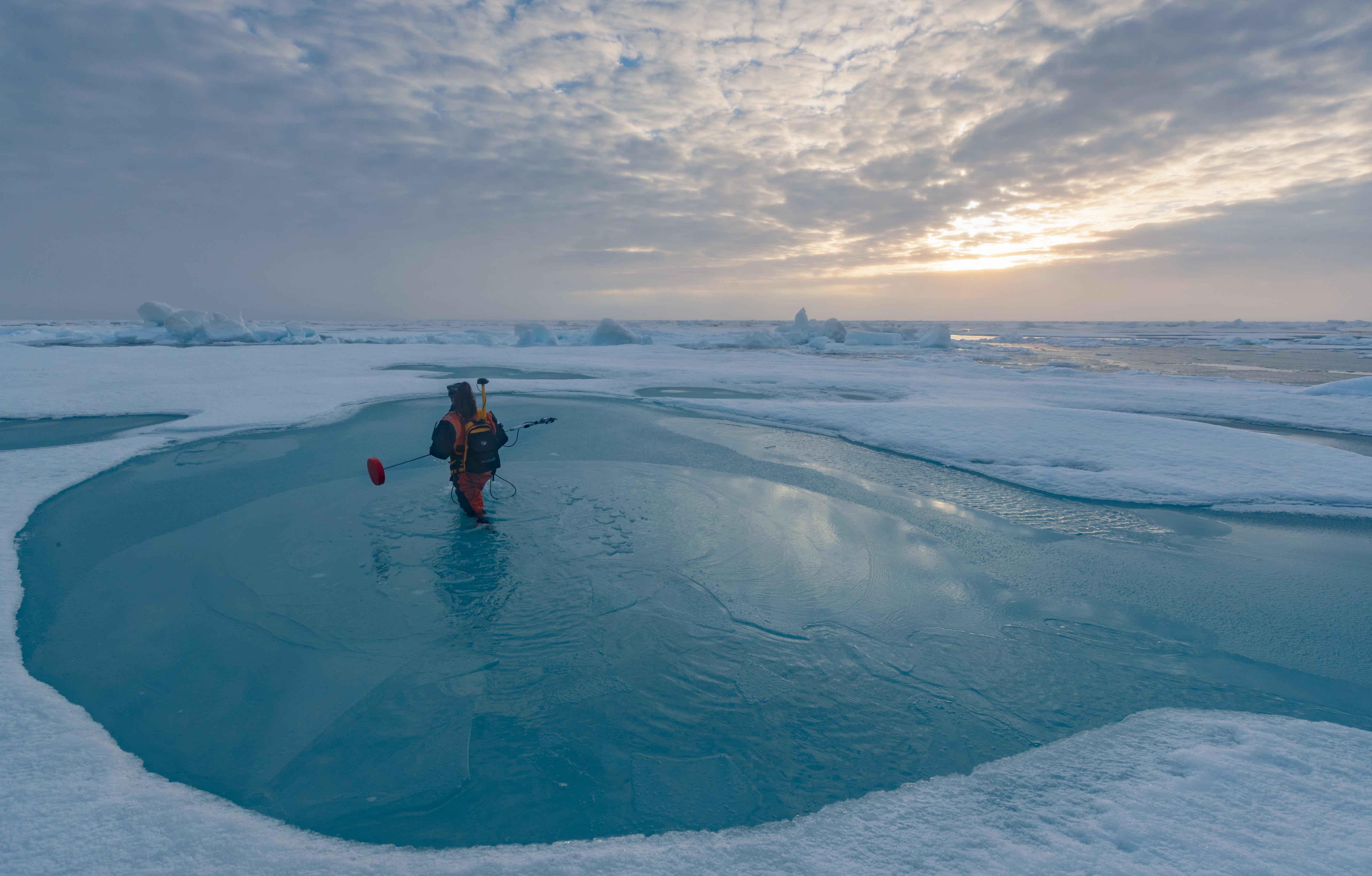 Dr. Melinda Webster wades through a melt pond in the Arctic