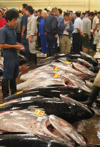 Photograph of tuna being sold at a market in Japan