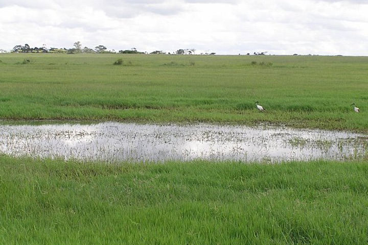 Aedes mosquitoes are often found near dambos—natural, shallow depressions that become flooded during periods of abundant rainfall. Such habitats are common in eastern and southern Africa and are good breeding grounds for mosquitoes.