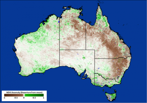 This NRT MODIS NDVI image was provided by the GLAM system. It shows the rolling 8-day NDVI product for Australia from 1-9 January 2014.