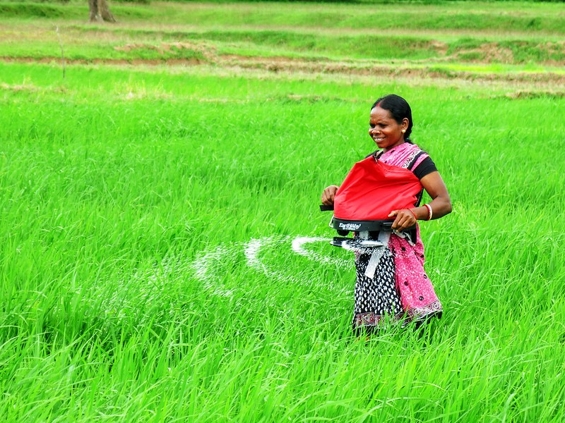 Photo shows a woman in India using a mechanical fertilizer spreader.