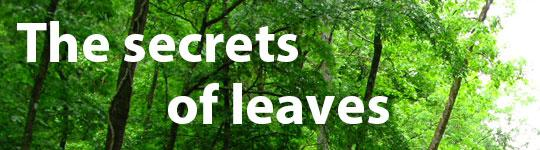 The secrets of leaves