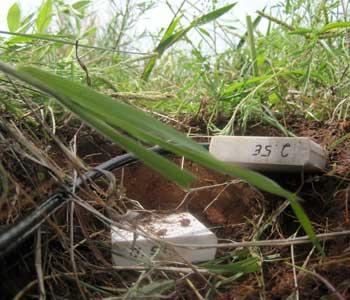 Photograph of soil moisture probes.