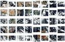 VIIRS Suomi-NPP swath imagery thumbnail