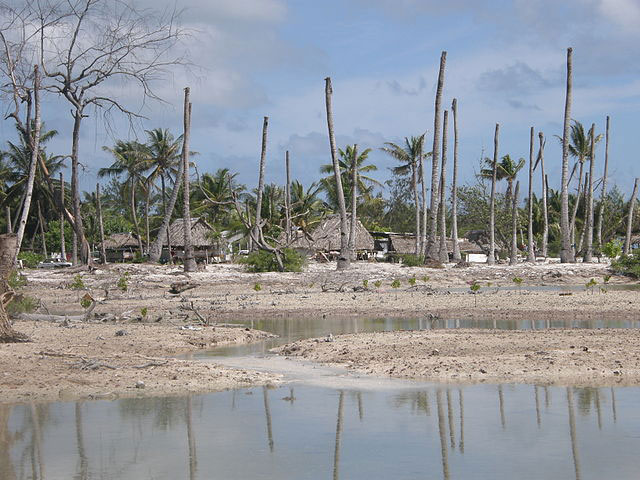 Photograph showing coastal erosion and dead palm trees on the island nation of Kiribati