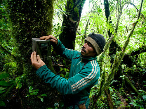 Photograph of a researcher hanging a camera trap on a tree