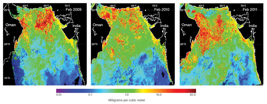 Satellite images of plankton in the Arabian Sea