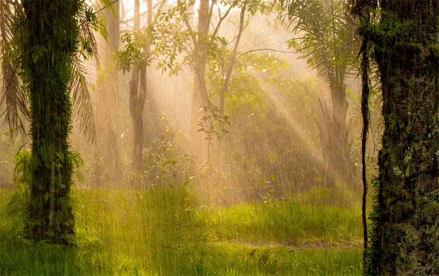 Photograph of sunlight in a Congo forest