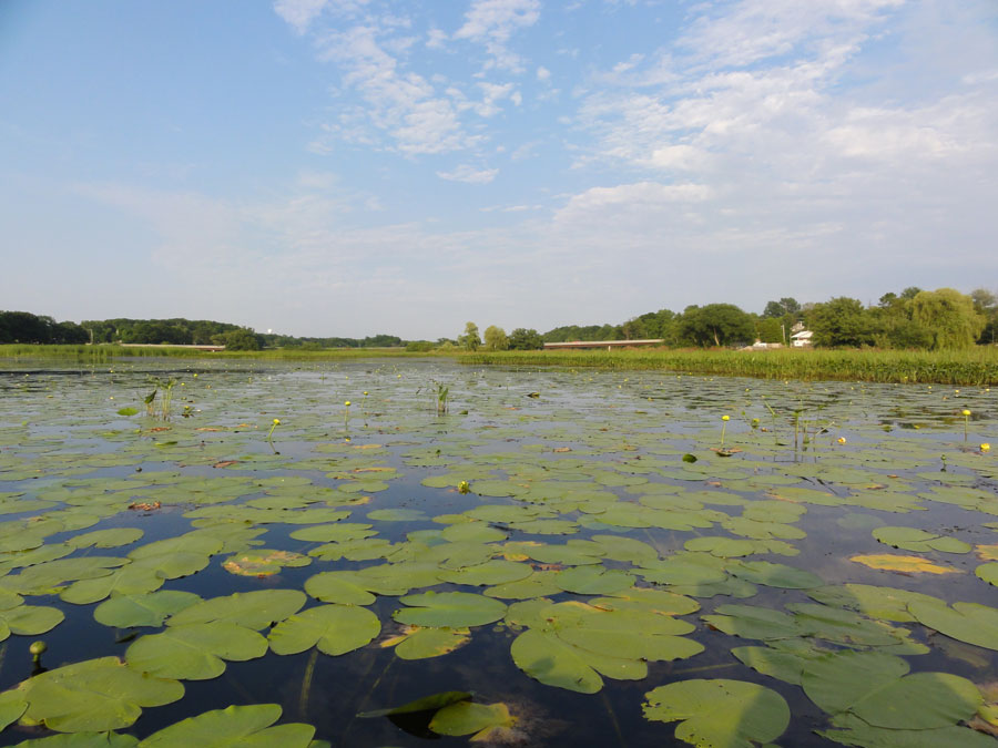 Photograph of a wetland