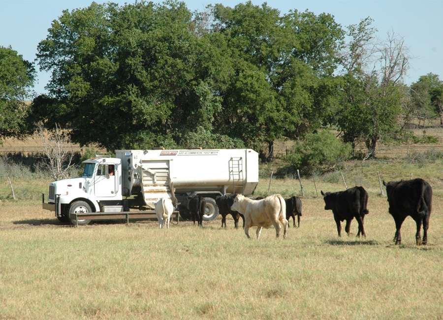 Photograph of a truck distributing feed to drought-stricken cattle in Texas