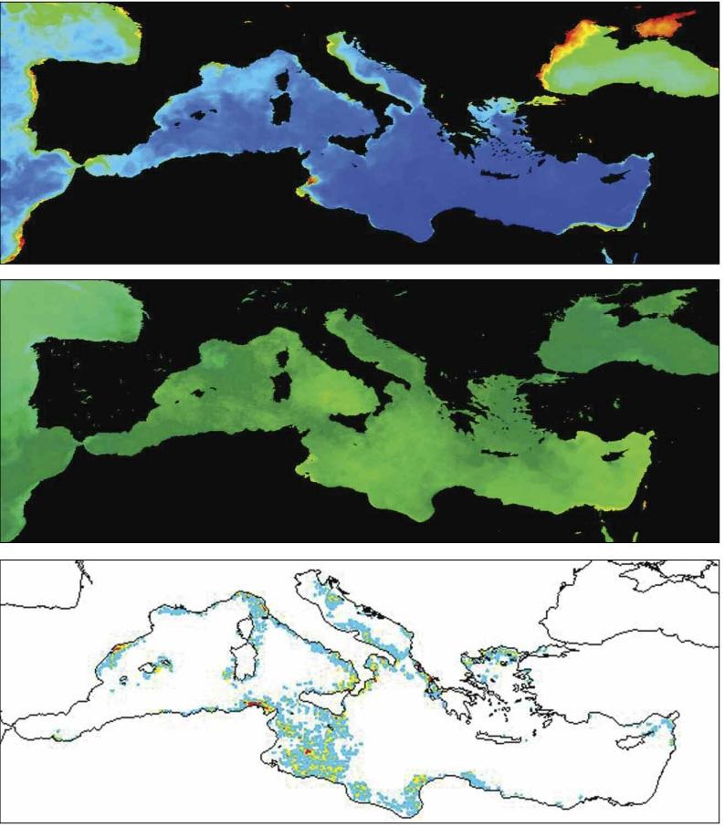 Mnemiopsis leidyi habitat