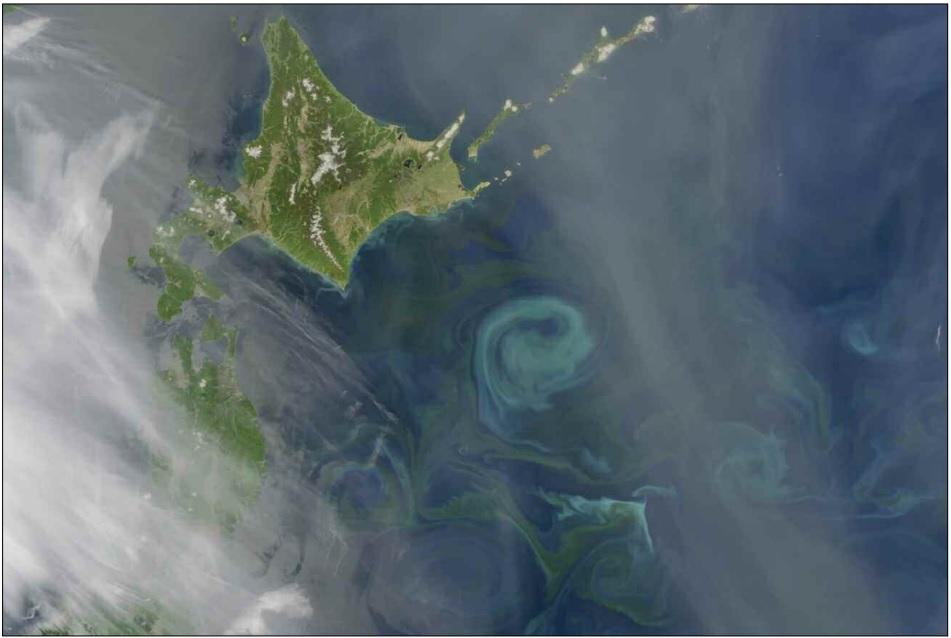 Kuroshio phytoplankton bloom
