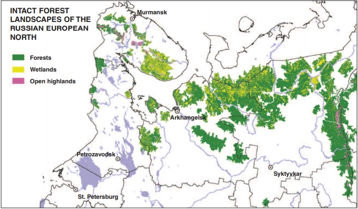 Global Forest Watch Russia