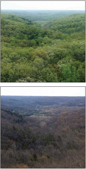 Missouri canopy