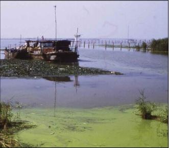 blue green algal bloom Lake Taihu