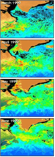 SeaWiFS North Atlantic bloom