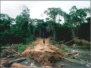 rain forest logging
