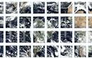 VIIRS NOAA-20 Swath thumbnail