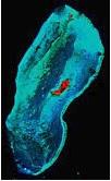 Landsat shallow coral reef