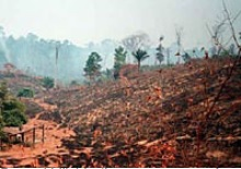 burned hillside LBA-E