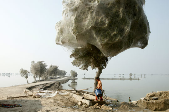 A girl stands next to a tree covered in webs in a heavily flooded area in Sindh, Pakistan. Millions of spiders have climbed into the trees to escape the flood waters. (Photograph by R. Watkins courtesy Department for International Development)
