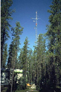 flux tower boreal forest